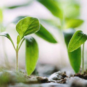 Boden- und Pflanzenprodukte